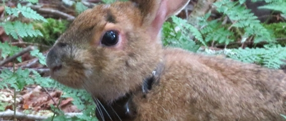 Article on our new snowshoe hare project in West Virgina
