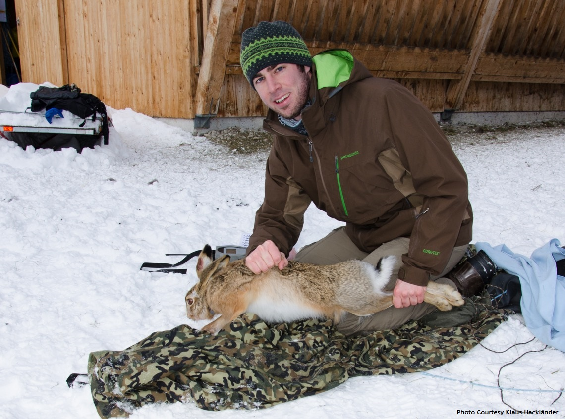 Klaus Hacklander with trapped hare