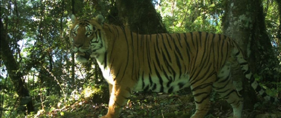 Interview with Scott and Tempa on tiger conservation in Bhutan