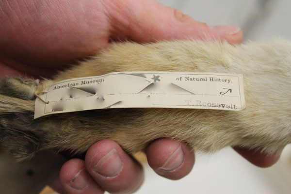 Sample from Northeast Museum Mammal Collections