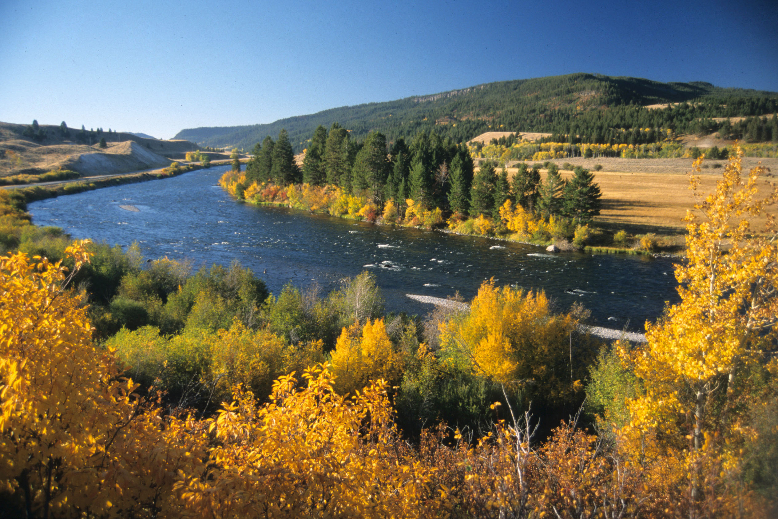 Photo: The Madison River flows past autumn foliage upstream from Ennis. (Photo by Rick and Susie Graetz)