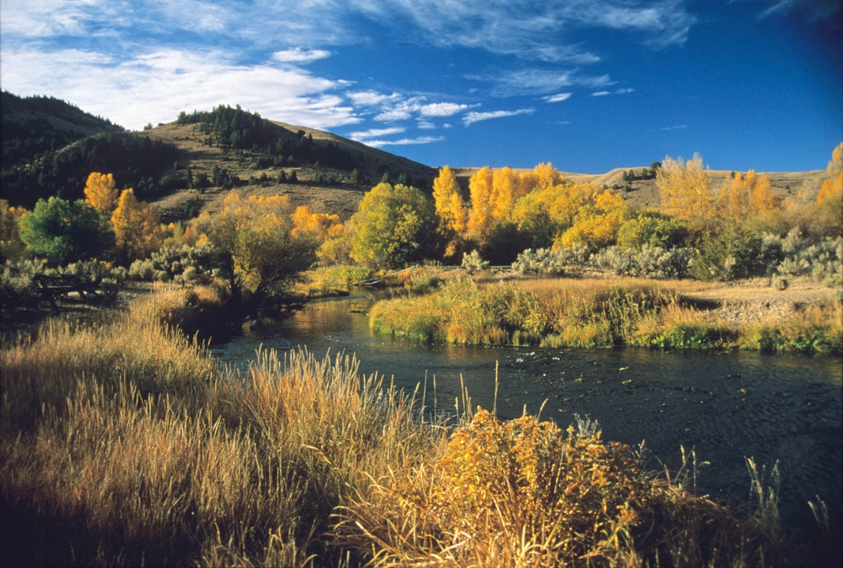 Foliage turns from green to golden in the fall weather along Grasshopper Creek near Bannack, Montana.
