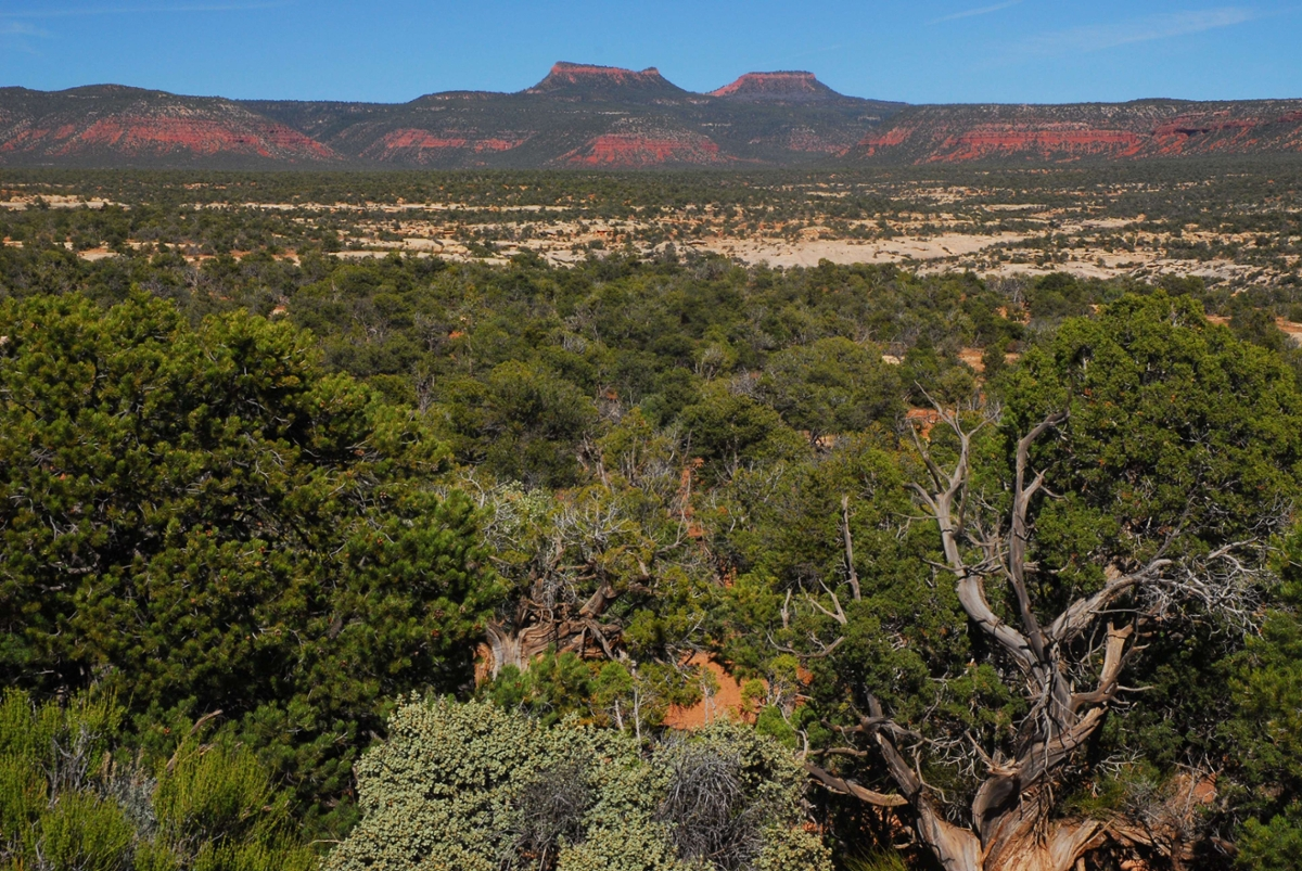 The Bears Ears, seen from the west, loom in the distance. (Rick & Susie Graetz photo)