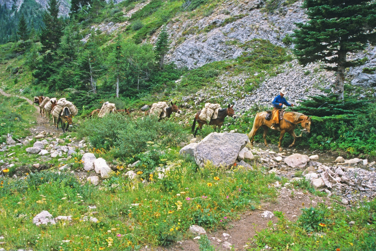 Dustry Crary leads a mule train down Route Creek Pass in the Bob Marshall Wilderness.