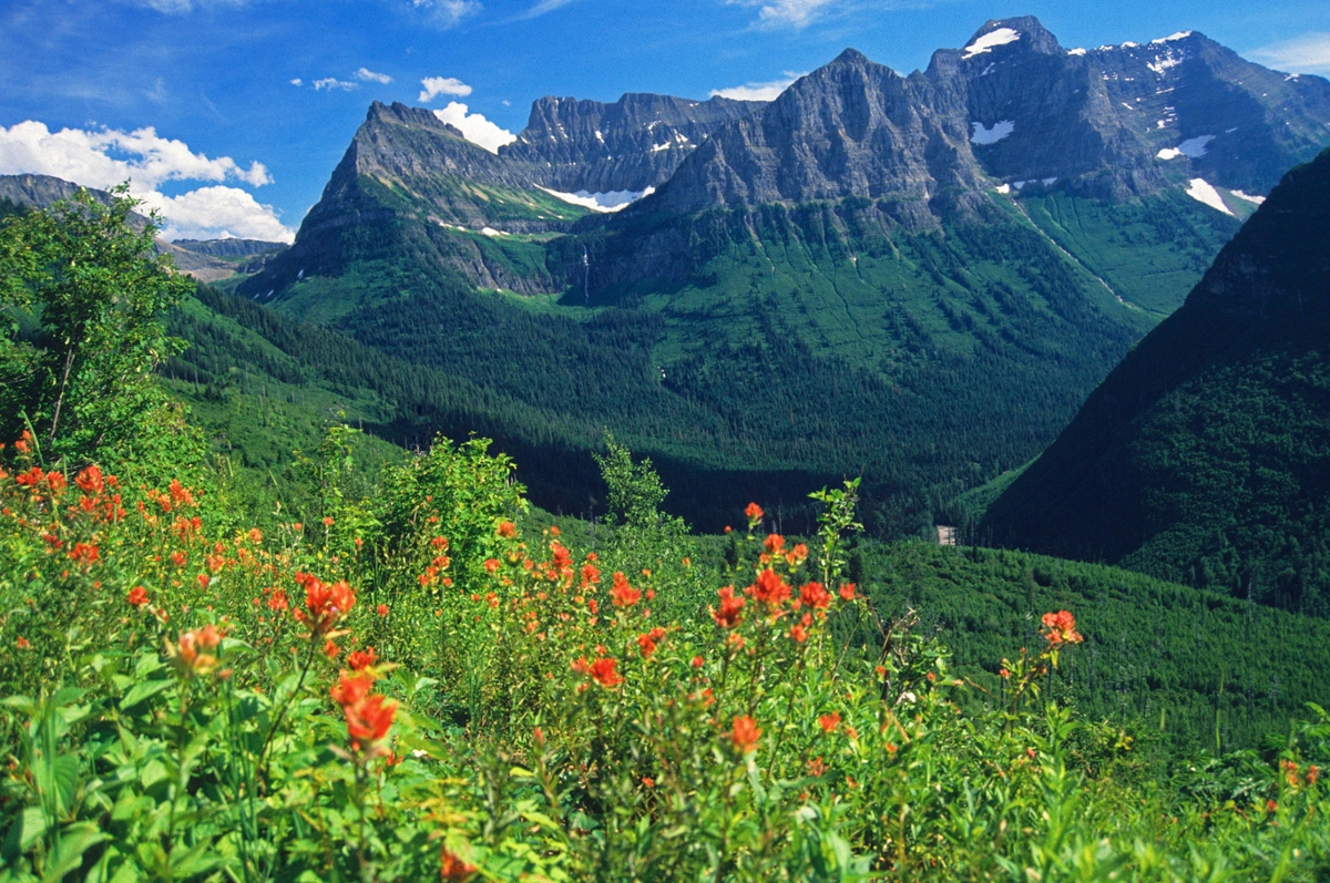 Bird Woman Falls in Glacier National Park with indian paintbrish flowers in the foreground