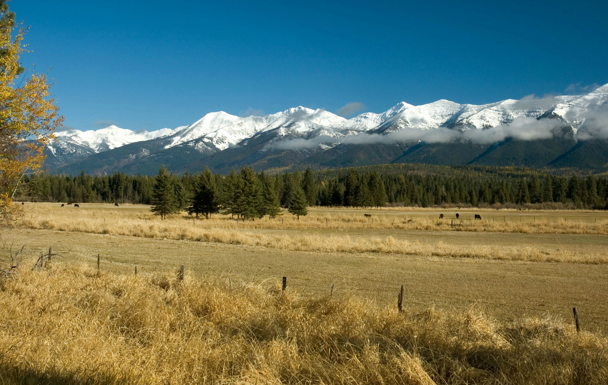 Snow-capped peaks of the Swan Range rise above the forest-covered valley floor